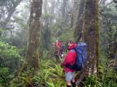 Misty+bush+on+the+way+out.jpg